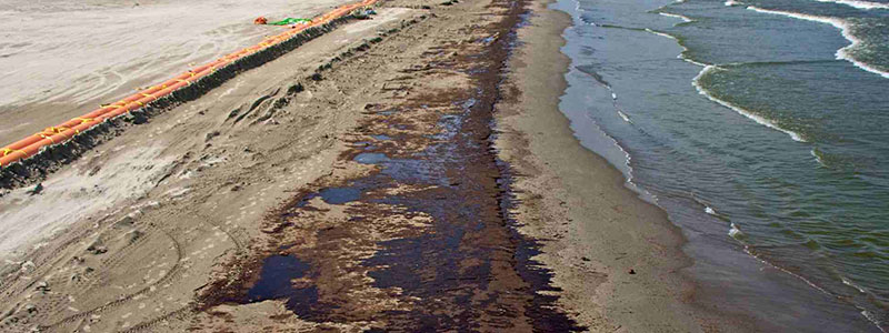 The Impact Oil Spills Have On The Environment